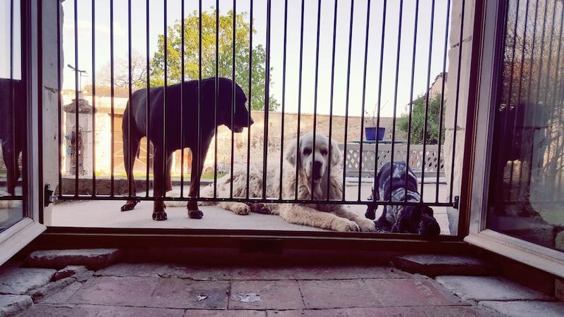 chiens de la messardière